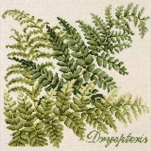 The Dryopteris by Elizabeth Bradley