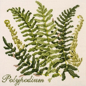 The Polypodium by Elizabeth Bradley